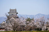 信濃路の桜 005 - 感動模写Ⅱ