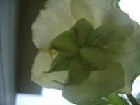 春の花 - 老