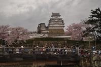 姫路城のお堀をぐるっと桜巡り(1)桜門橋からスタート - たんぶーらんの戯言
