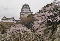 姫路城のお堀をぐるっと桜巡り(3)喜斎門あたり - たんぶーらんの戯言