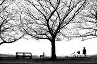 桜、、、。 - HONKY TONK 51