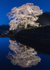 小奴可の要害桜 - 写真ブログ「四季の詩」