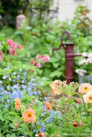 Sさんの庭 - この植物をお買い2