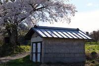 桜の小屋。 - とうほく小屋の写真帖