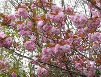 路傍の花、樹々の鳥(156) ~ もう一花咲かせましょうか ~ - 大屋地爵士のJAZZYな生活