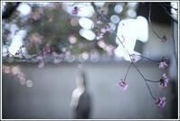 谷根千 -87 - Camellia-shige Gallery 2