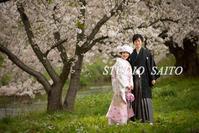 桜と春満開撮影!! - スタジオサイトーな日々