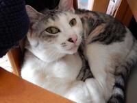 梅ちゃんレポート(27) 角館 - 愛犬家の猫日記
