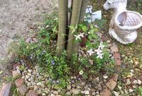 春の庭の植物たち その2 - 風に吹かれて+++水の町にくらす