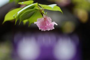 一気呵成の春点描 - 自然万華鏡 Blog version