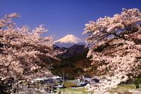 29年4月の富士(23) 山里の富士  - 富士への散歩道 ~撮影記~