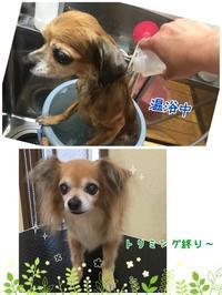 店長の日記〜脳ドッグ〜 - トリミングサロンオリーブスタッフ日記