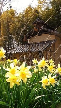 春の木工小屋 2017.04.21 - 漆職人のかぶれにっき