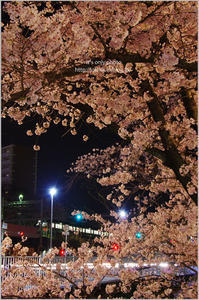 '17 桜*Ⅳ -駅前の夜桜- - It's only photo