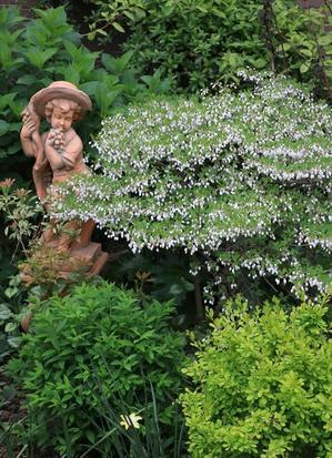 可愛いドウダンツツジ♪ と黄色いお花たち - miyorinの秘密のお庭