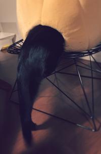 ネコみかんベッド再び - 小 ハル 日和