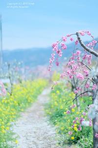 桃の花のアーチは・・ - カメラをもってふらふらと