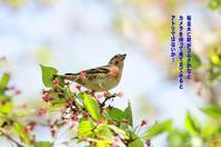 渡りの途中! - Weblog : ちー3歩