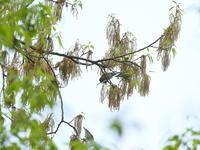 お目当て出て来ない里山 - TACOSの野鳥日記