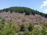 今年最後のお花見 常照皇寺 - タワラジェンヌな毎日