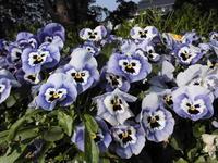春の紫色の花 - ありがとう