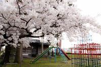 桜さく - 笑顔同封