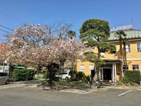 駅近のレトロ空間。──「ホテル ニューカマクラ」 - Welcome to Koro's Garden!