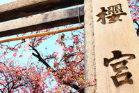 櫻花祭@櫻宮神社 - 司法書士 行政書士 柿本大治の青空さんぽ