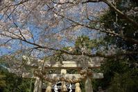先週の桜 - One Shot One....