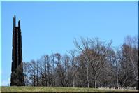 春の野草 野幌森林公園 - 北海道photo一撮り旅