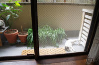 最近の猫事情21 - 鳥会えず猫生活