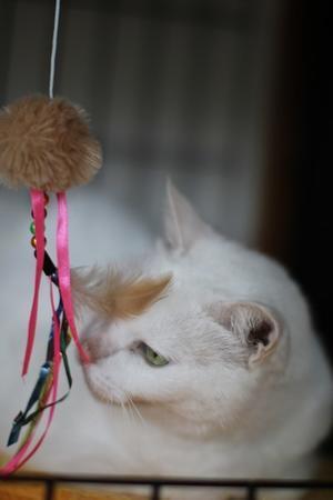 他の猫さんが嫌いな保護猫 - 保護猫さんのご縁探し