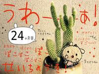 """続々々々々々々々・""""うさぎちゃん""""と""""多肉うさぎちゃん""""。 - maki+saegusa"""