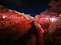 我が町の夜桜1 @福島県石川町 - 963-7837