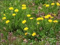 道の小草も花ざかり - じょんのび
