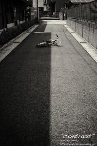 """contrast"" - ~まきち写真工房~"