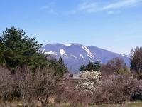 庭仕事始めましたぁ~^^ - 浅間山眺めてほのぼのlife~花だより♪