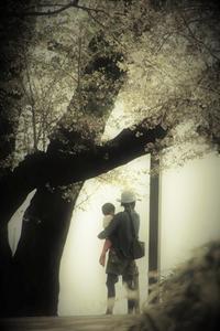 sacraの木の下で  - 夢・ファンダンゴ