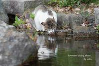 二匹の ネコ - サカナのおカオ