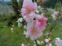 旧和泉村の渓谷をお散歩 - 福井山歩会