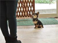 犬のしつけ方教室 4/20 - SUPER DOGS blog