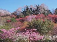 花見山公園&三春滝桜 花三昧  2017.4.19~20 - 心のまま、足の向くまま・・・