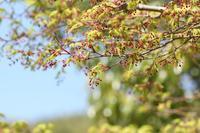 新緑に咲く線香花火のように♪ - happy-cafe*vol.2