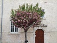 八重桜の形 - フランス Bons vivants idees d'aujourd'hui
