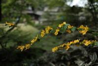 桜が終わった三渓園 - photo散歩~花と横浜とエトセトラ~