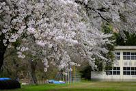 春の記憶 - デジタルで見ていた風景