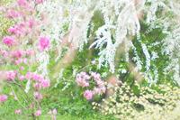 原谷苑のお花達〜ごちゃまぜ~ - *PHOTOMOMIN*