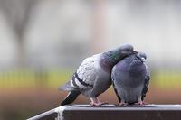Heart warming - jinsnap (weblog on a snap shot)
