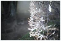 谷根千 -88 - Camellia-shige Gallery 2