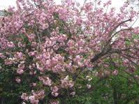 春の散歩道。 - とりとめのない日々~花と言葉と犬たちと